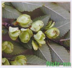 Ржавый вяз, голенькие пробиотики и закваски – хорошо или спорно Watermark2